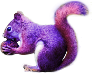 Purple Squirrel 2