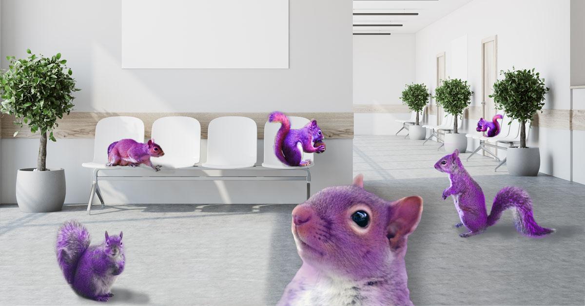 purple squirrels in waiting area